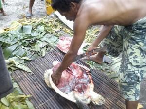 Penyu Hijau di Kepulauan Tanimbar Terancam Punah