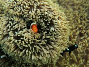 pemandangan bawah air pulau Maratua