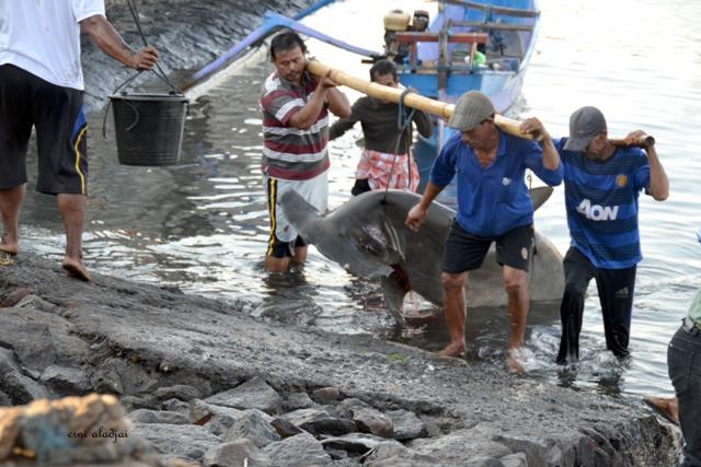 Ikan-ikan Hiu dan Nelayan Tanjung Luar