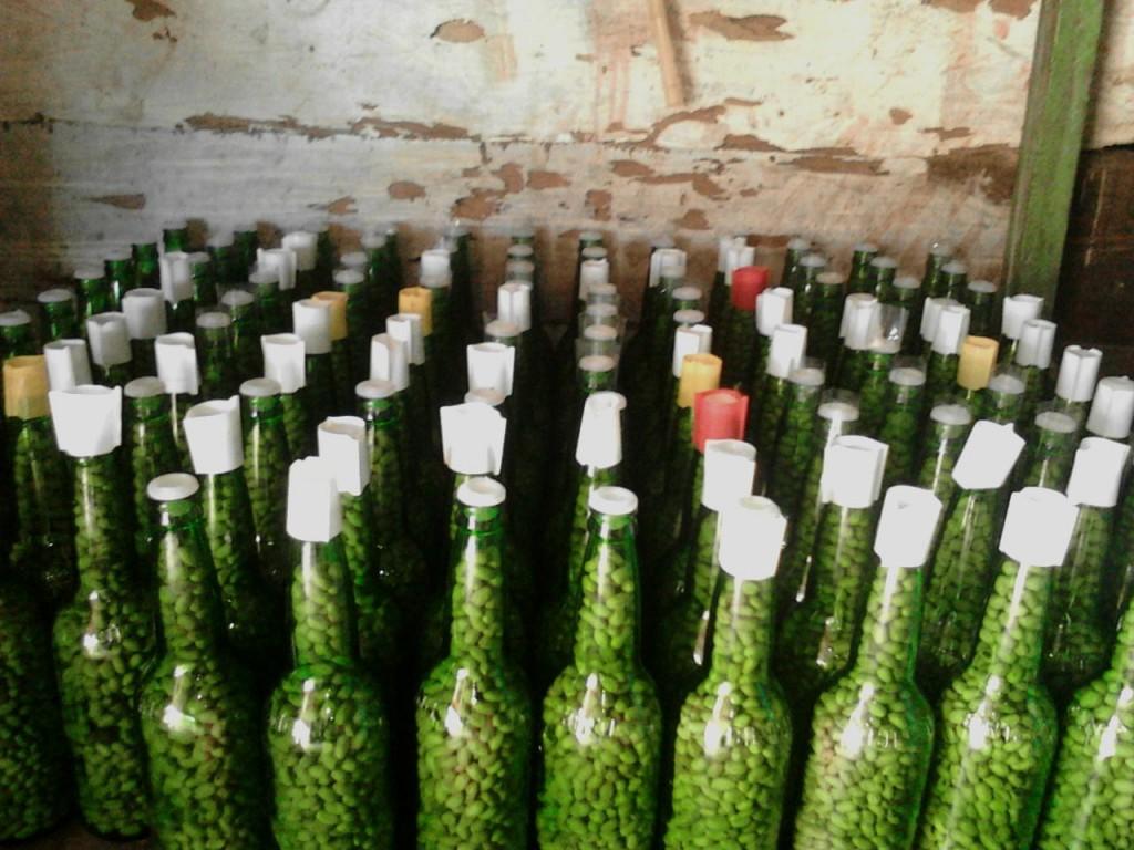 Kacang botol khas Larat