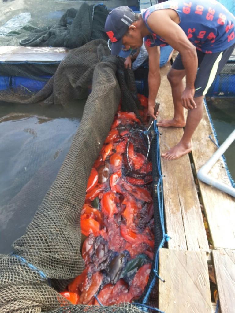 Ikan-ikan yang siap dipasarkan ke luar Saumlaki