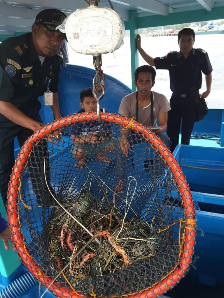 Lobster hasil tangkapan nelayan