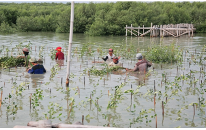 Suasana penanaman mangrove di Trimulyo, Semarang