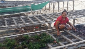Sonya Maskikit menjemur rumput lautnya di atas para-para bantuan PT. Inpex Ltd (foto: DFW Indonesia)