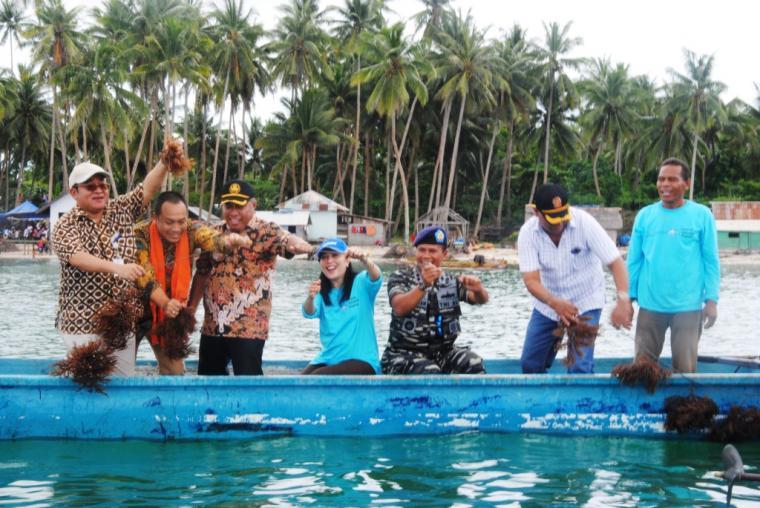 Panen Perdana Rumput Laut