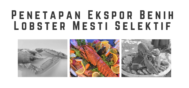 Penetapan Ekspor Benih Lobster Mesti Selektif