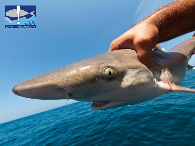 Lokasi pemburuan hiu